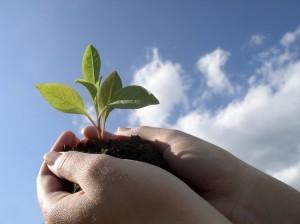 plant clouds hands